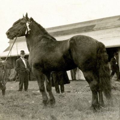 Saint Louis County Fair at Poole, showing horse